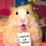 enrico poletto è un ragazzo di 49 anni e risiede a Tavazzano con Villavesco